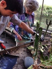 Brian & Sr. Jean are reviving the greenhouse cacti.